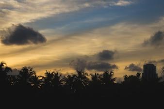 Sonnenuntergang hinter Silhouetten von Palmen und Gebäuden