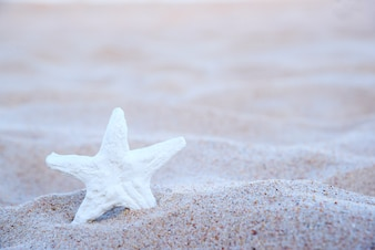 Starfish am Strand