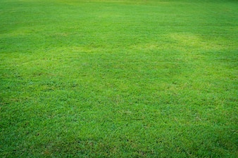 Stück Rasen