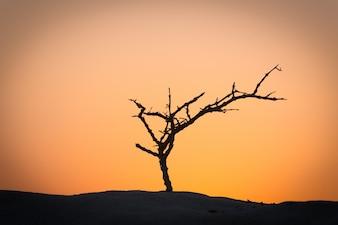 Totes Baum Silhouette