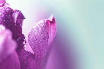 Unschärfe Fantasie Blütenblatt Sommer Kopie