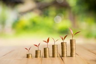 Wachsende Pflanze auf Reihe von Münzen Geld, csr in der Wirtschaft