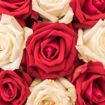 Weiß und rot stieg auf weiß