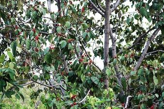 Zweig Hintergrund Holz braun Dekoration fallen