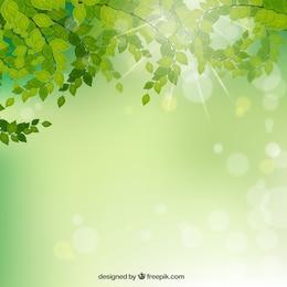 Zweige mit grünen Blättern Hintergrund