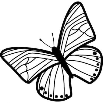 細いストライプの羽模様の蝶が平面から左に回転