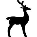Deer Facing Right