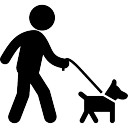 Dog with belt walking with a man