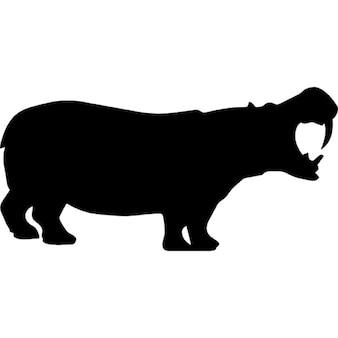 Hippo shape