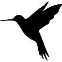 Hummingbird Vectors Photos And Psd Files Free Download