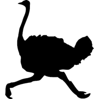 Ostrich Bird shape running