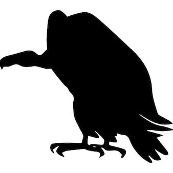 ハゲタカの鳥の形