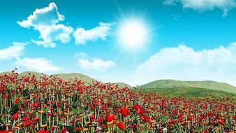 3d render of a poppy field landscape