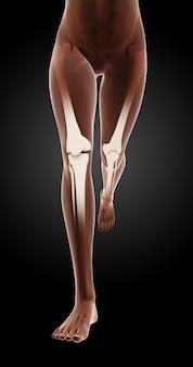実行中の女性の医療スケルトン脚の3Dレンダリング