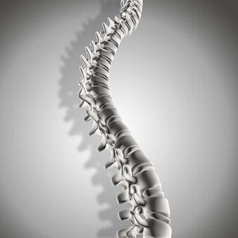 3d render of spine