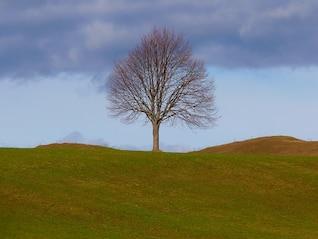 tree life individually still meadow nature  sky