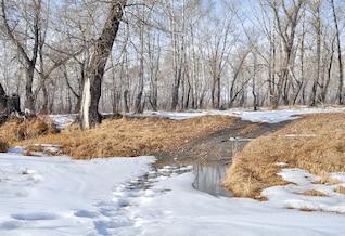 landscape spring trees puddles forest snow