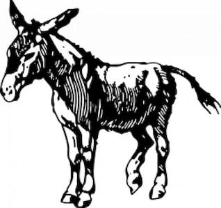 Donkey drawing vector