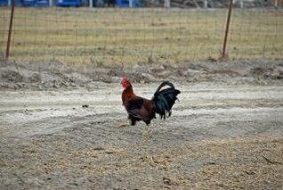 On the Run, beak