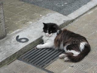 Cat, fur, lazy
