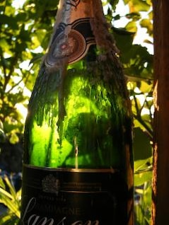champagne bottle photograph with leaves at background