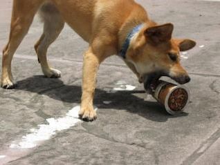 Dog Attacking Coffee Cup