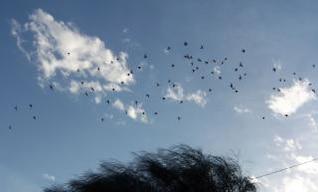 Migration, birds