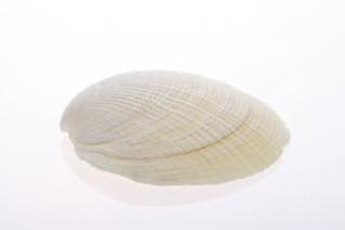 seashell   environment  thorn