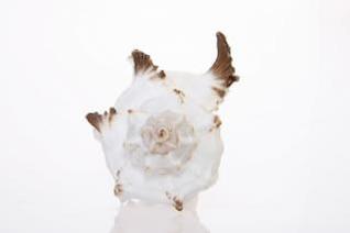 Seashell, closeup