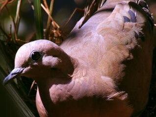 sunbath  nest