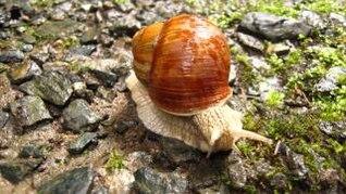 snail  reptile  snail