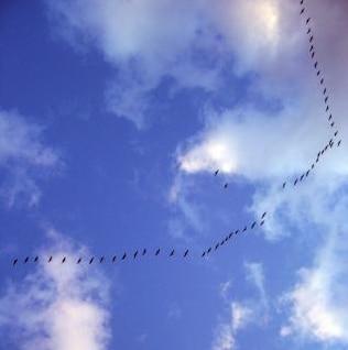 flying away  flying