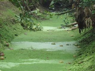 green irrigation ditch