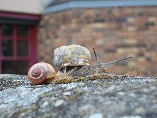 snail family  reptile