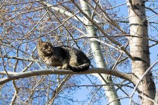 cat in tree  blue