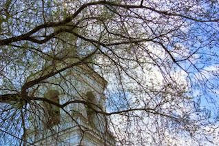 cathedral and branches