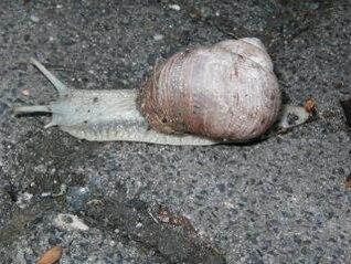 Snail, lazy, snail