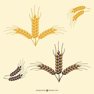 Wheat leaves vector