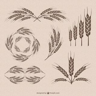 Retro wheat vector collection