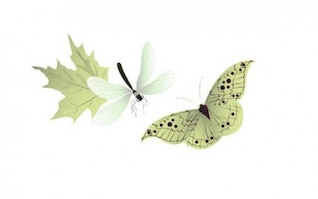 Butterfly dragonfly delicate soft vector