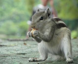 a standing sqiurrel