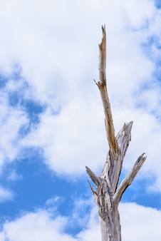A twig tree branches in a blue sky and white clouds background