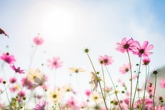 優雅な色のコスモスの花bokehのテクスチャ柔らかいぼかしの背景とパステルヴィンテージレトロスタイル
