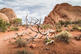 Adventure in desert