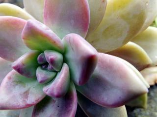 Alien flower  plant