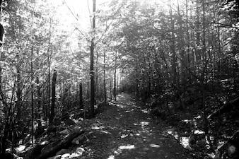 森の中アローン