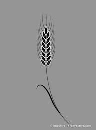 Antique laurel leaf illustration