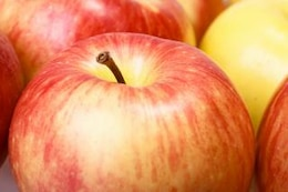 apples  organic