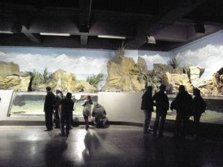 Aquarium in Istanbul.