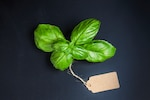 Aromatic plant with a cardboard label